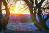 Dream (Corvin Gröning) Tags: beautifulview burningsky cold forest glowingsky landscape nature sky snow sun sundown sunset tree trees warm winter woods