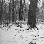 Im Wald. thumbnail