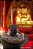 Kill Your Desires - Buddhist Temple XP7708e (Harris Hui (in search of light)) Tags: harrishui fujixpro2 digitalmirrorlesscamera fuji fujifilm vancouver richmond bc canada vancouverdslrshooter mirrorless fujixambassador xpro2 fujixcamera fujixseries fujix fuji56mmf12 fujiprimelens fixedlens blessing prayer richmondbuddhisttemple buddhist buddhisttemple temple incensestick worship worshipper chineseculture buddha buddhism