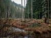Beaver Pond (Ramona H) Tags: stimpsonpreserve usa washington washingtonstate whatcomcounty beaver forest hiking pond rain trail wer wetland