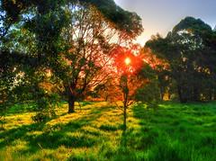 Orange evening rural III (elphweb) Tags: hdr highdynamicrange nsw australia rural farm sunset tree trees forest bush farms farmland dairy