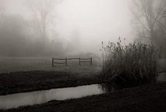 Misty Park (Clare-White) Tags: vondelpark amsterdam water winter fence plants unanimous thechallengefactory winner flickrchallengewinner megagrindwinner mpt646 matchpointwinner