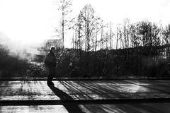 Light explosion (stefankamert) Tags: stefankamert light shadows people man noir noiretblanc blackandwhite blackwhite ricoh grd grdiv gr bw baw street tree sun pointandshoot lines