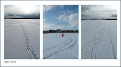 Tracks in the snow (evisdotter) Tags: tracksinthesnow spårisnön winter snow collage allpicssooc ice slemmern mariehamn