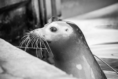 Zoo Karlsruhe in Schwarzweiss (12)