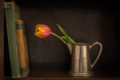 Still Life with Tulip and Books (suzanne~) Tags: tulip flower stilllife book shelf dark pitcher silverpitcher indoor tabletop velvet56 lensbaby