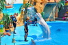 The Dolphinarium. (System zero) Tags: dolphins show dolphinarium water black sea view photo affectionate friendly service beautiful photos photography
