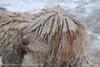 Rasta dog (srkirad) Tags: dog rasta hair travel winter budapest hungary snow cloudy cold white tan bokeh blur dof depthoffield