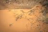DSC_8152.jpg (kimsegal59) Tags: archespark landscape mesaarch moab redrock utah