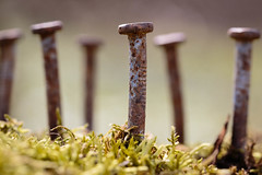 Lost Purpose (Joe_R) Tags: macro nail decay moss ruin macrounlimited