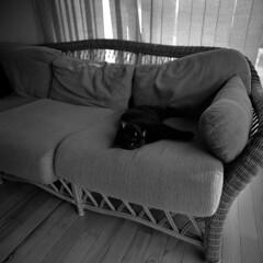 Tired Cat (Kyle Michaels) Tags: zenzabronicasqa zenzabronica bronica bronicasqa sqa square 6x6 fujineopanacros fuji acros kodakhc110 hc110 kodak wideopen f4 zenzanonps40mmf4 zenzanonps 40mm 40mmf4 cat indoors epsonv600 wideangle 160 bw film vintage manualfocus