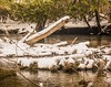 In a natural state . . . (Dr. Farnsworth) Tags: river cedarriver logs brush flow fish canoe tuber bellaire mi michigan winter march2018 fantasticnature screamofthephotographer