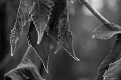 strada comun 25 (formicacreativa) Tags: stradacomun percorsociclopedonaleferrazzeveronavegetazionepiantegelobrinacorsodacqua sorgenti macro pianta animale sentiero legno albero foschia strada cielo sentierobattuto erba foresta parco paesaggio