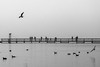 somewhere there's a place / lost in the world (Özgür Gürgey) Tags: 105mm 2018 bw büyükçekmece d750 nikon sigma birds bridge fog grainy lake lines people seagull silhouettes istanbul