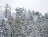 Winter Forest - Snow Valley Resort, California (ChrisGoldNY) Tags: chrisgoldphoto chrisgoldny chrisgoldberg forsale licensing bookcovers bookcover albumcover albumcovers sonyalpha sonya7rii sonyimages sony california socal cali snowvalley winter forrest trees snow ice cold freeze frozen freezing day exterior nature