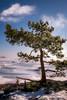 Lonely tree (Joni Salama) Tags: lumi maa luonto kasvit talvi vesi kallahti puu vuosaari helsinki suomi mänty uusimaa finland fi snow nature winter pine landscape