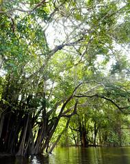 Über den Amazonas (Anciet) Tags: amazonas colombia jungle south america