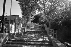 Una escalera (Lograi) Tags: sabadell barcelona cataluña catalunya catalonia españa espanya spain geoetiquetada geotagged bw blancoynegro byn blackandwhite blackwhite bn escalera stairs árbol tree