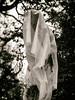 Wraith 2 (Feldore) Tags: belfast ghost ghostly wraith spectre haunting haunted spirit strange botanic gardens northern ireland feldore mchugh em1 olympus 1240mm plastic wrapped wrapping