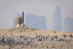 070A3747 (Cog2012) Tags: qatar
