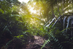 Bienvenue dans la jungle... (jonathan le borgne) Tags: seychelles island exotic tropical jungle végétale sun light sunshine