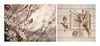 🌸🌸🌸    💟   🌸🌸🌸 (.... belargcastel ....) Tags: primavera spring flores árbol flowers still bodegón stilllife libro taza cuchara belargcastel españa spain galicia belénargüeso diptico bokeh dof