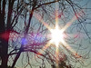 Sunburst, Sky And Tree Branches. (dccradio) Tags: lumberton nc northcarolina robesoncounty canon powershot elph 520hs outside outdoors nature natural light sun sunshine sunlight starburst sunburst rays sticks tree trees branches treebranches treelimbs sky bluesky