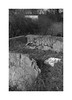 (billbostonmass) Tags: adox silvermax 100 129silvermax1100min68f fm2n 40mm ultron sl2 epson v800 revere massachusetts rumney marsh