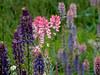 Lago di Misurina - 5 (anto_gal) Tags: dolomiti veneto belluno cadore lago misurina tre cime lavaredo montagna 2011 fiori dolomites