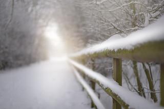 Towards the Light...    #HFF #HappyFenceFriday #FenceFriday