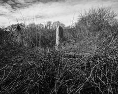 peak (primemundo) Tags: obelisk overgrown