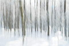 Flou hivernal (Gisou68Fr) Tags: bois woods forêt forest neige hiver winter snow arbres trees icm intentionalcameramovement flou flouintentionnel canoneos650d