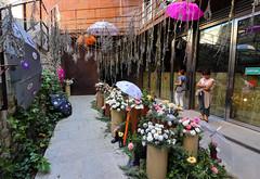 Temps de flors_0273 (Joanbrebo) Tags: girona catalunya españa es tempsdeflors tempsdeflors2017 canoneos80d eosd efs1018mmf4556isstm autofocus