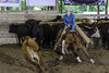 June 6 2015 - AQHA/NCHA Days 1. (dc2photo) Tags: ocha cow cutting equine horse sports western