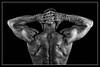 Studio Latmar (janvier 2018) (Vision Factory) Tags: fitness physique male blackandwhite bw studio muscle back homme gymnastic sport noiretblanc bodybuilding nb masculin man