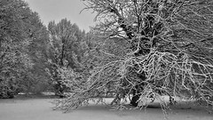 Tentacoli Bianchi (W@nderluster) Tags: snow winter snowscape travel street italy italia piemonte piedmont trees weather outside plants albero neve rami grigio grey white noiretblanc