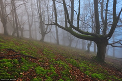 Enchanted Forest (Hector Prada) Tags: bosque niebla musgo forest fog moss mood ambiente bruma invierno winter árbol tree encantado misterioso enchanted charmed creepy paísvasco basquecountry