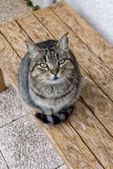 Bouboulina (jeanmichelchuiche) Tags: yeux regard banc chatte miaumiau minette bouboulina chat
