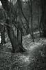 walking path 3 (Amselchen) Tags: trail path footpath walkingpath season spring mono monochrome bnw blackandwhite dof depthoffield sony a7rii alpha7rm2 samyang 85mmf14 sonyilce7rm2