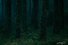 Green dark wood (jorgeverdasca) Tags: misty mist foggy fog green magiclight canon canonphoto darknature darkness dark gothicnature gothic goth landscape nature forest woodland woods sintra portugal