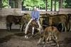 August 21, 2011 - Minshall Farm Cutting 4. (dc2photo) Tags: ncha ocha cow cutting cuttinghorse equine horse sport sports top25 western