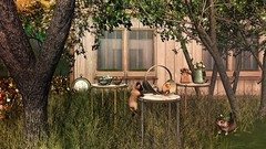 To every thing there is a season. (delilahhannu) Tags: │t│l│c│ dahlia littlebranch jian senseevent raindale bloggging decor secondlife