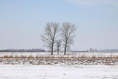 Bobrowa Trees pic [1] IMG_0300 b (david.neville2776) Tags: trees snow bobrowa podkarpackie drzewa śnieg