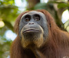 L1711957 (sjefrobroek) Tags: mina bukit lawang sumatra