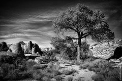 Lonely Tree At Alabama Hills, California (thedot_ru) Tags: lonely tree solitude loneliness alienation survival redrocks mountain mountwhitney alabama hills california blackandwhite usa monochrome bw travel adventure travels wanderlust travelling america canon5d 2010