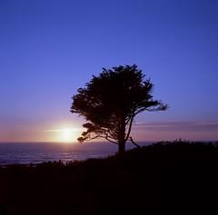 """Oregon Can Be My Muse"" (Death By Sushi) Tags: sunset yachats westcoast oregon zeissikon mediumformat ektar kodak film"