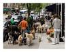 160513_1235_160513 133443_oly_S1_New York (A Is To B As B Is To C) Tags: aistobasbistoc usa newyorkstate newyork roadtrip travel olympus stylus1s manhattan madisonave e86thst street streetphotography city citylife urban dog dogwalking fittingin matchingoutfit sidewalk onaleash doggydog