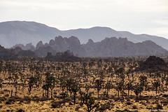 Dusty Granite Hills (isaac.borrego) Tags: california joshuatree nationalpark desert