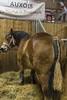 Salon de l'agriculture (Pierre ESTEFFE Photo d'Art) Tags: salon exposition agriculture animal ferme vache cheval mouton cochonpoule lapin fermier agriculteur foin paille tracteur paris seine75 france