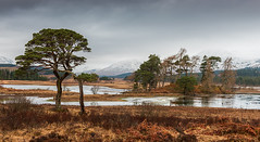 Trees by Tulla (Geoff France) Tags: landscape scottishlandscape highlands loch lake mere lochtulla inveroran bridgeoforchy trees water